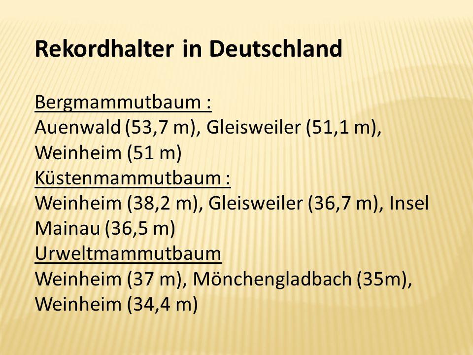Rekordhalter in Deutschland