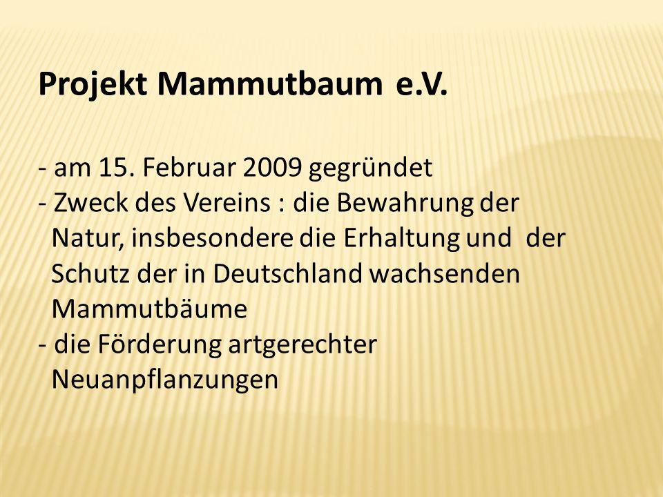 Projekt Mammutbaum e.V. am 15. Februar 2009 gegründet