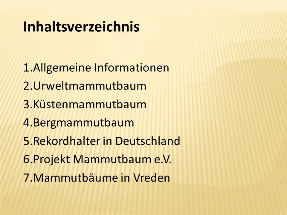 Inhaltsverzeichnis Allgemeine Informationen Urweltmammutbaum