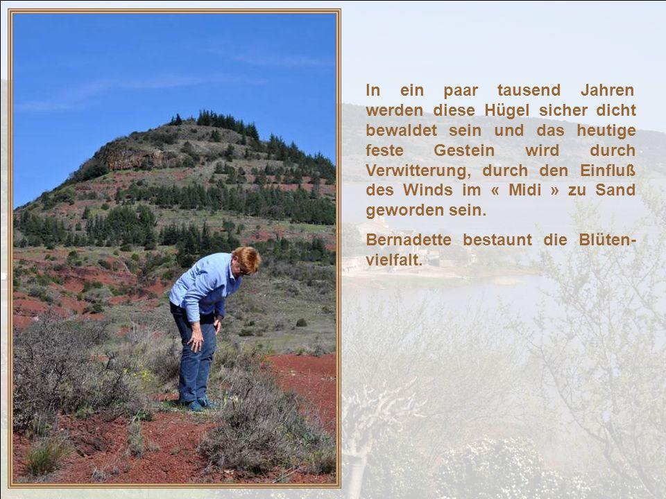 In ein paar tausend Jahren werden diese Hügel sicher dicht bewaldet sein und das heutige feste Gestein wird durch Verwitterung, durch den Einfluß des Winds im « Midi » zu Sand geworden sein.