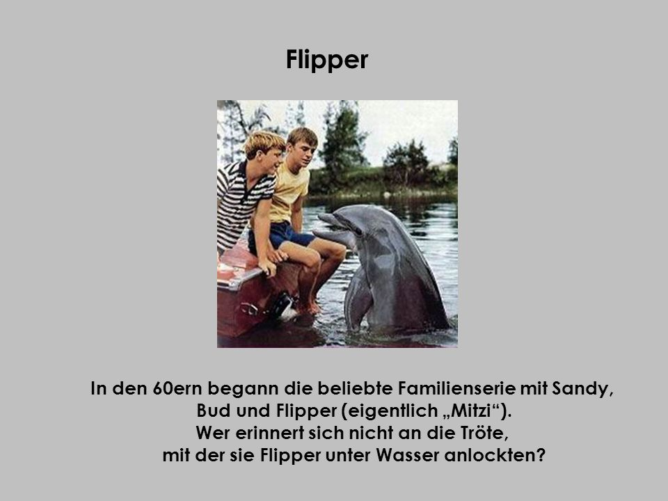 Flipper In den 60ern begann die beliebte Familienserie mit Sandy,