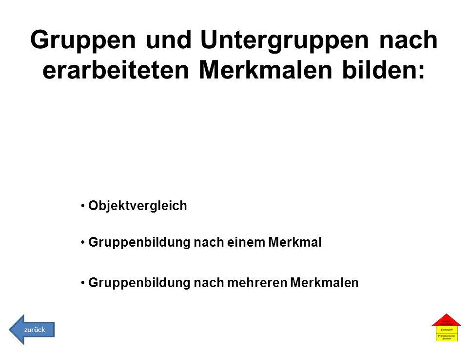 Gruppen und Untergruppen nach erarbeiteten Merkmalen bilden: