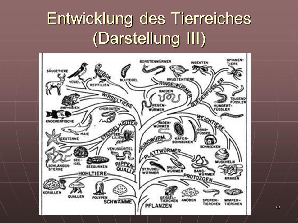 Entwicklung des Tierreiches (Darstellung III)