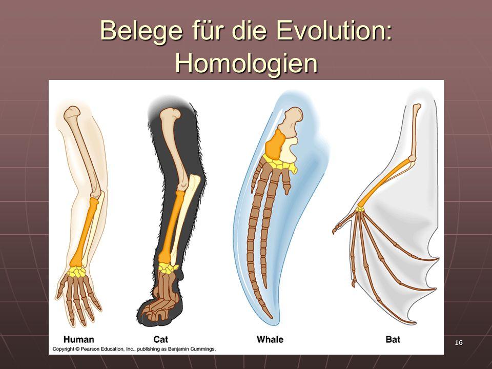 Belege für die Evolution: Homologien