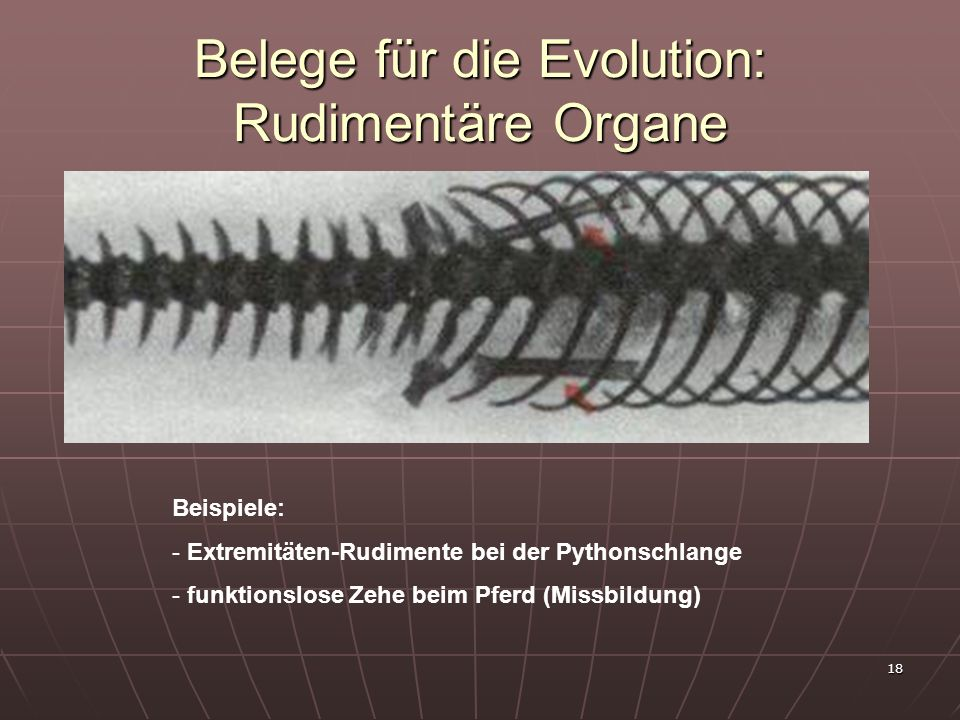 Belege für die Evolution: Rudimentäre Organe