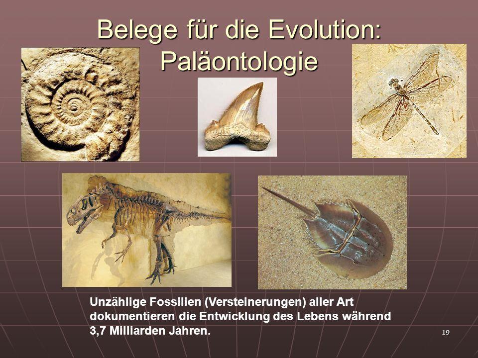 Belege für die Evolution: Paläontologie