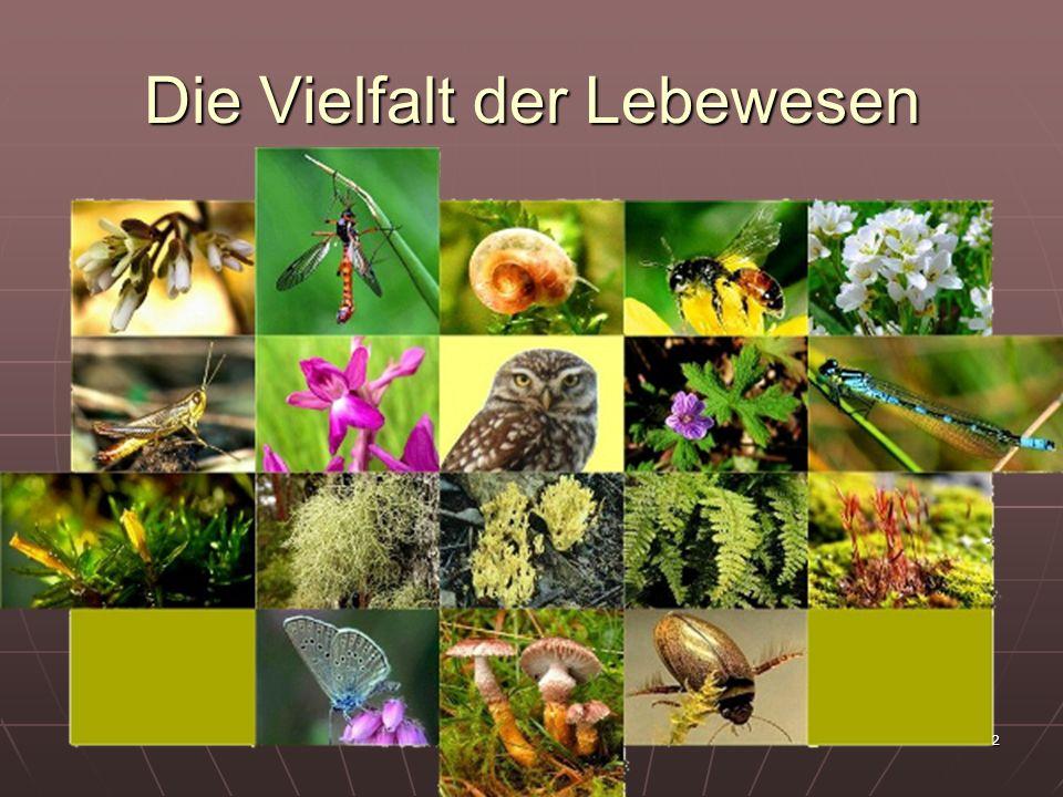Die Vielfalt der Lebewesen