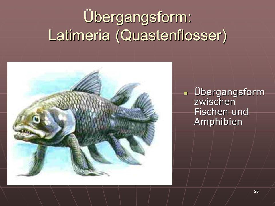 Übergangsform: Latimeria (Quastenflosser)