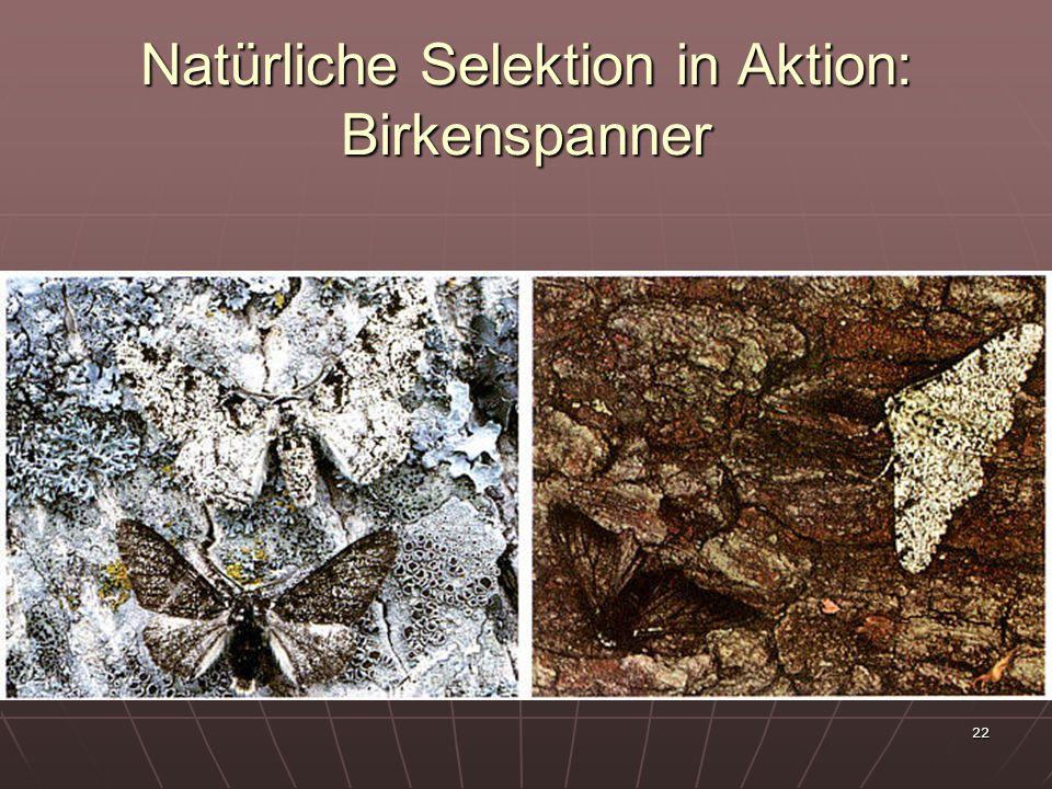 Natürliche Selektion in Aktion: Birkenspanner