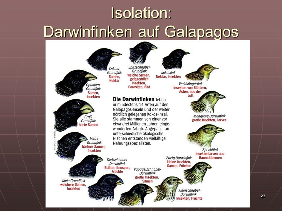 Isolation: Darwinfinken auf Galapagos