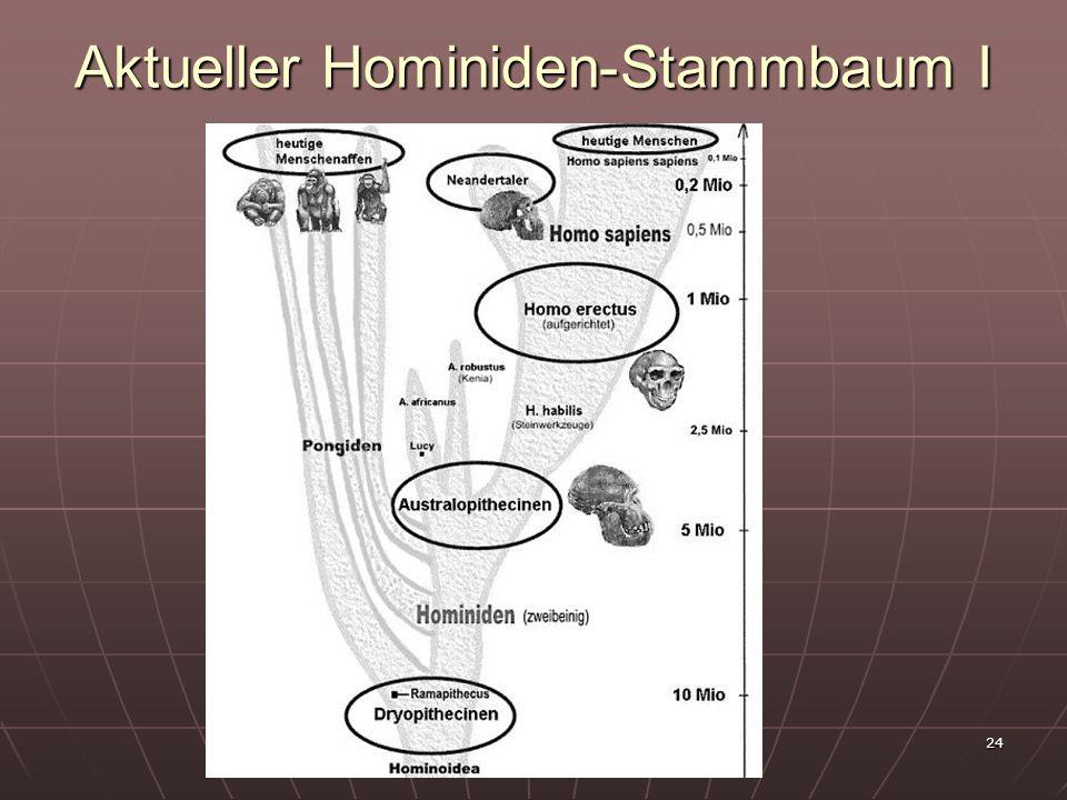 Aktueller Hominiden-Stammbaum I