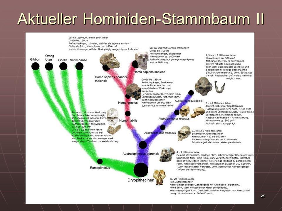 Aktueller Hominiden-Stammbaum II
