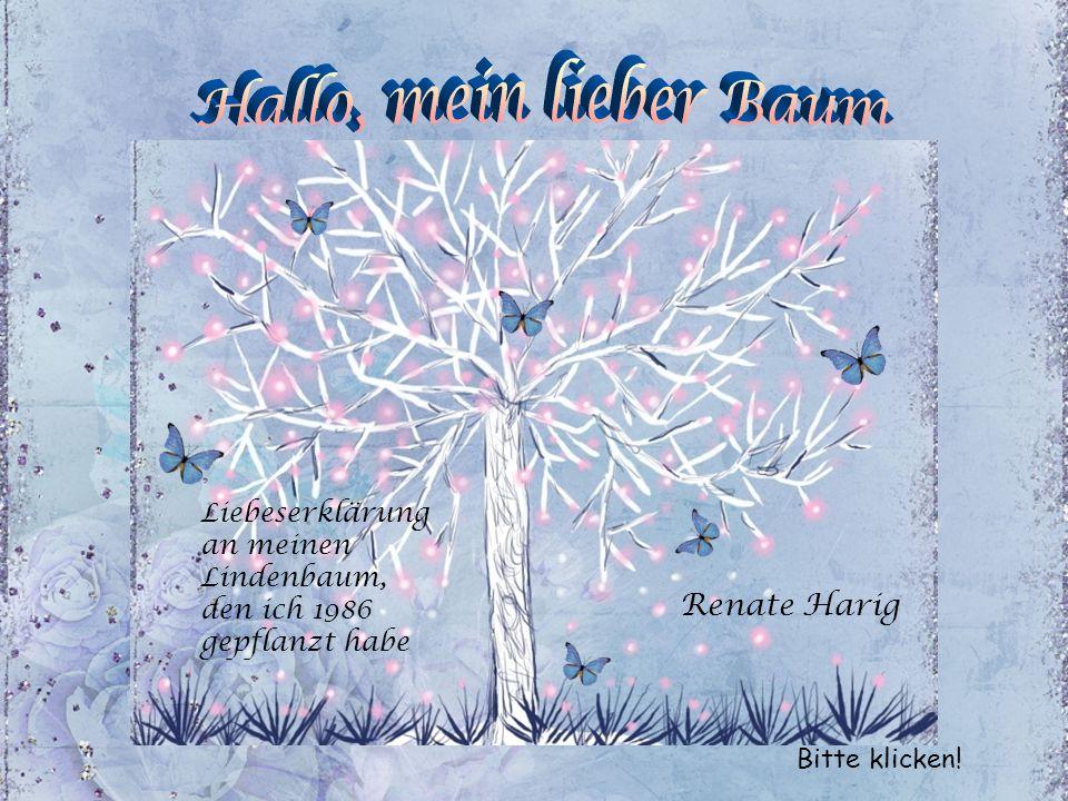 Hallo, mein lieber Baum Renate Harig Liebeserklärung