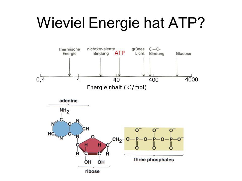 Wieviel Energie hat ATP