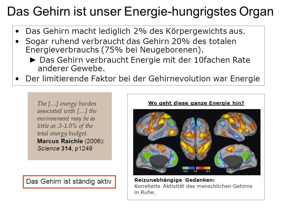 Das Gehirn ist unser Energie-hungrigstes Organ