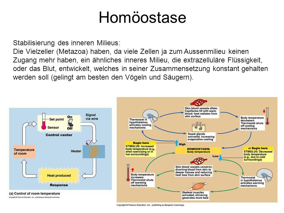 Homöostase Stabilisierung des inneren Milieus: