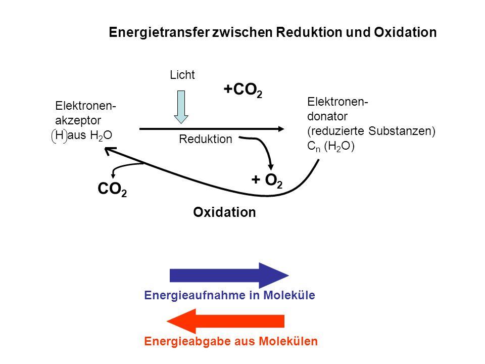 +CO2 + O2 CO2 Energietransfer zwischen Reduktion und Oxidation