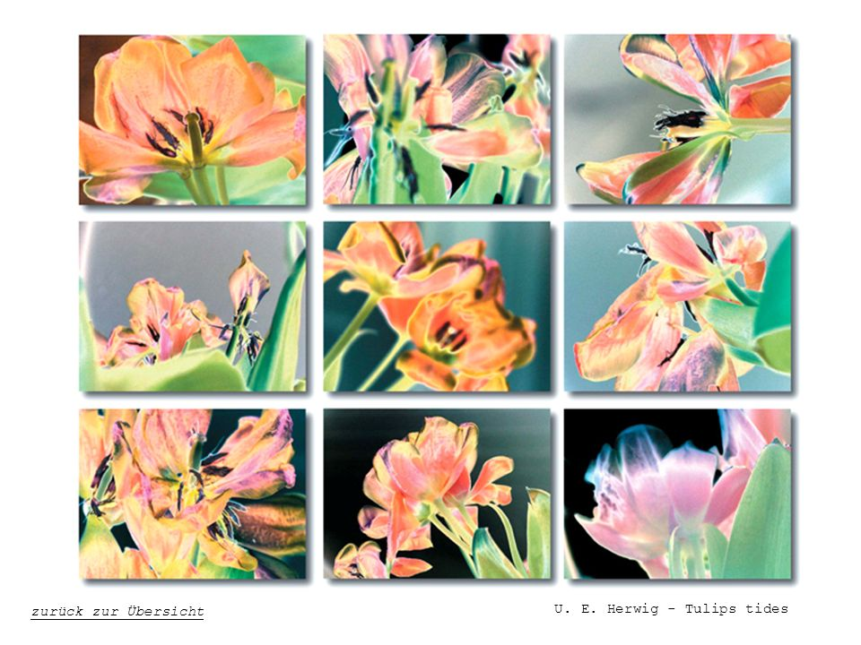 U. E. Herwig - Tulips tides
