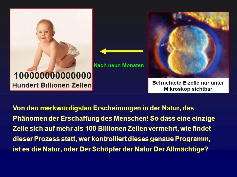 100000000000000 Hundert Billionen Zellen
