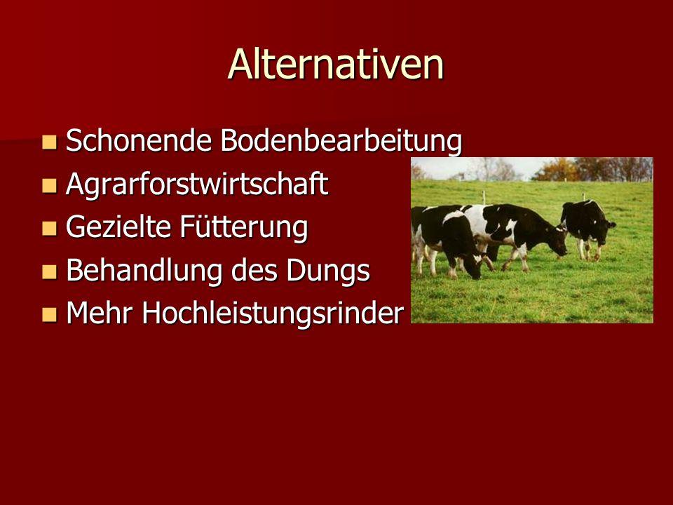 Alternativen Schonende Bodenbearbeitung Agrarforstwirtschaft