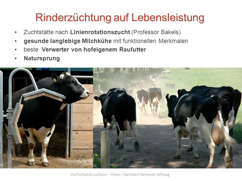 Rinderzüchtung auf Lebensleistung