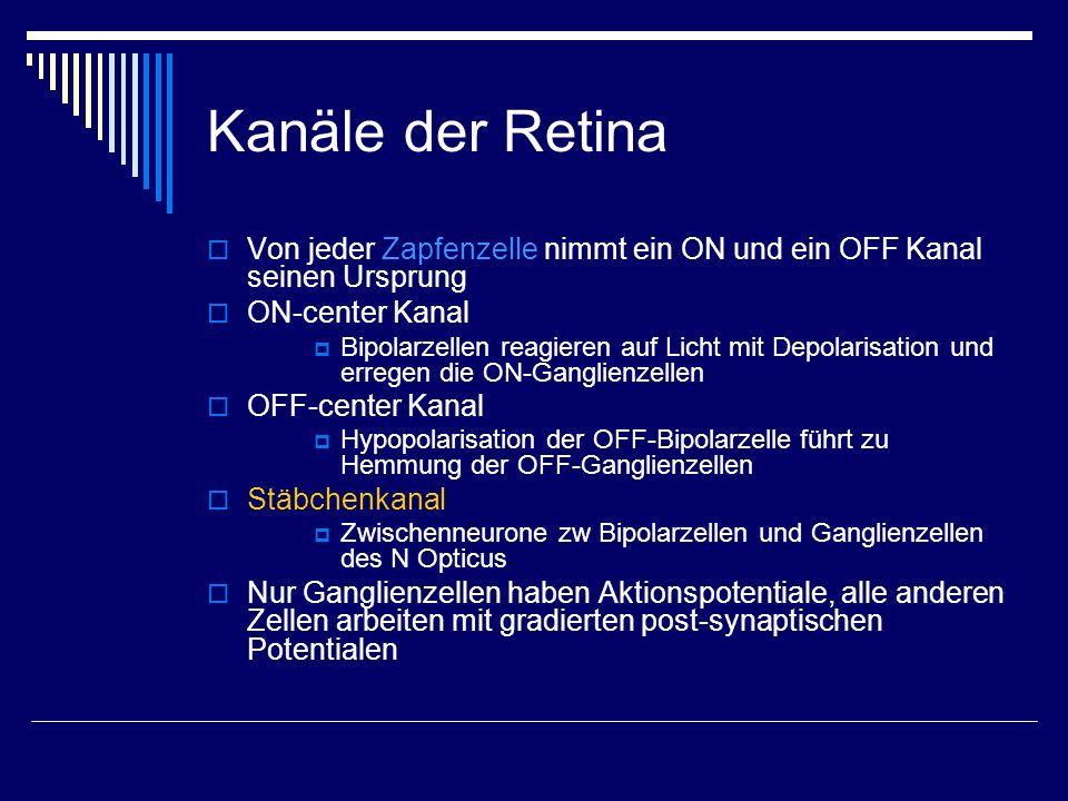 Kanäle der Retina Von jeder Zapfenzelle nimmt ein ON und ein OFF Kanal seinen Ursprung. ON-center Kanal.