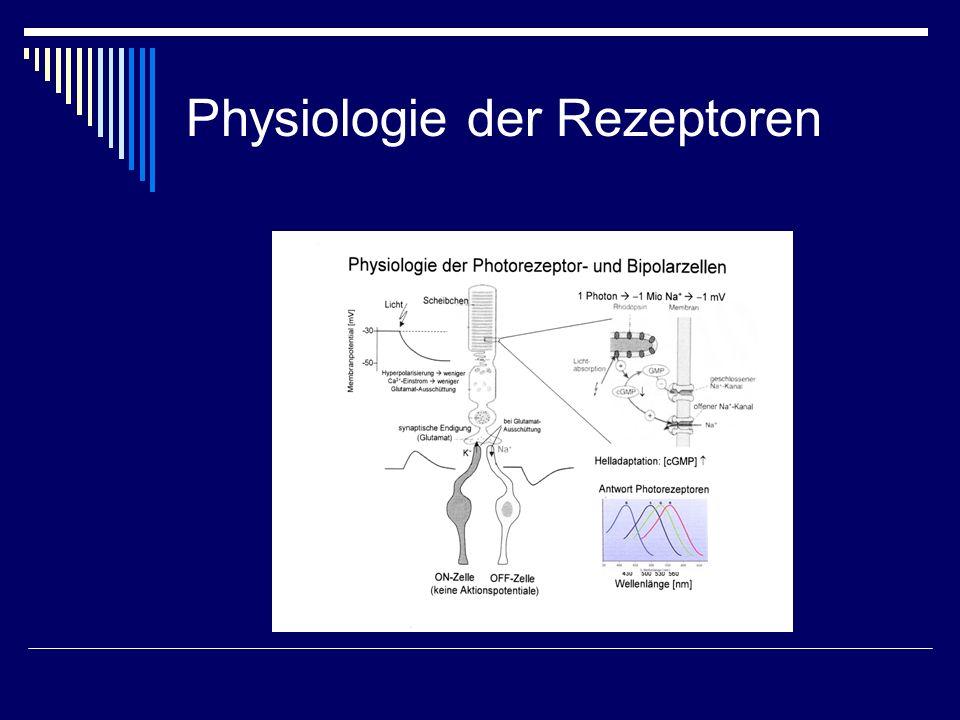 Physiologie der Rezeptoren