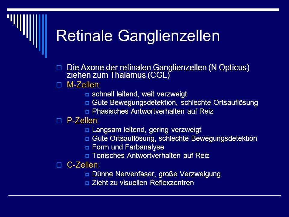 Retinale Ganglienzellen