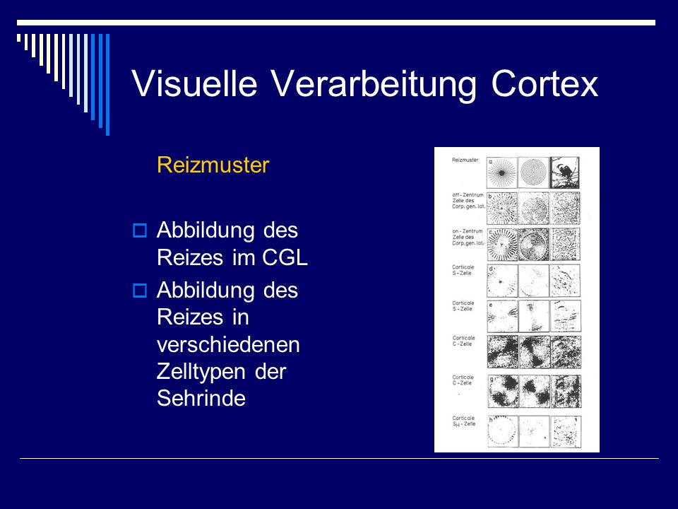 Visuelle Verarbeitung Cortex
