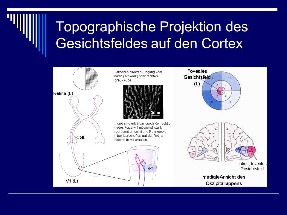 Topographische Projektion des Gesichtsfeldes auf den Cortex