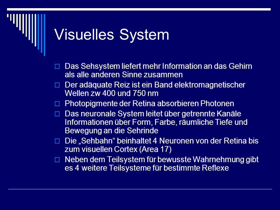 Visuelles System Das Sehsystem liefert mehr Information an das Gehirn als alle anderen Sinne zusammen.