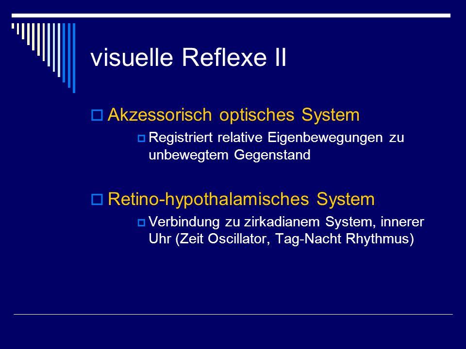 visuelle Reflexe II Akzessorisch optisches System