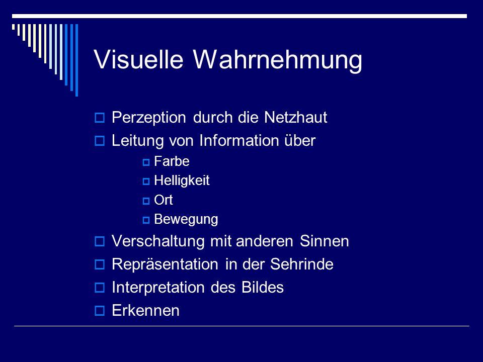 Visuelle Wahrnehmung Perzeption durch die Netzhaut