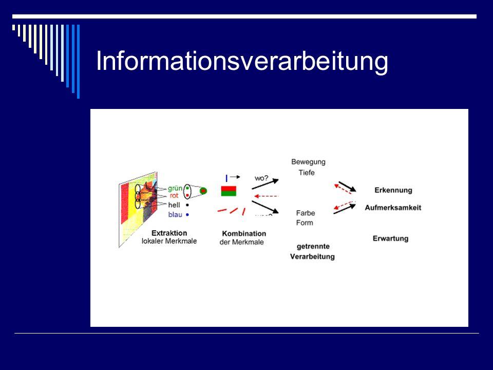 Informationsverarbeitung