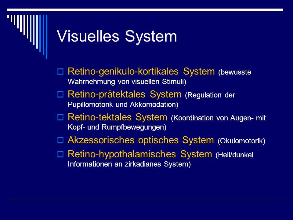 Visuelles System Retino-genikulo-kortikales System (bewusste Wahrnehmung von visuellen Stimuli)