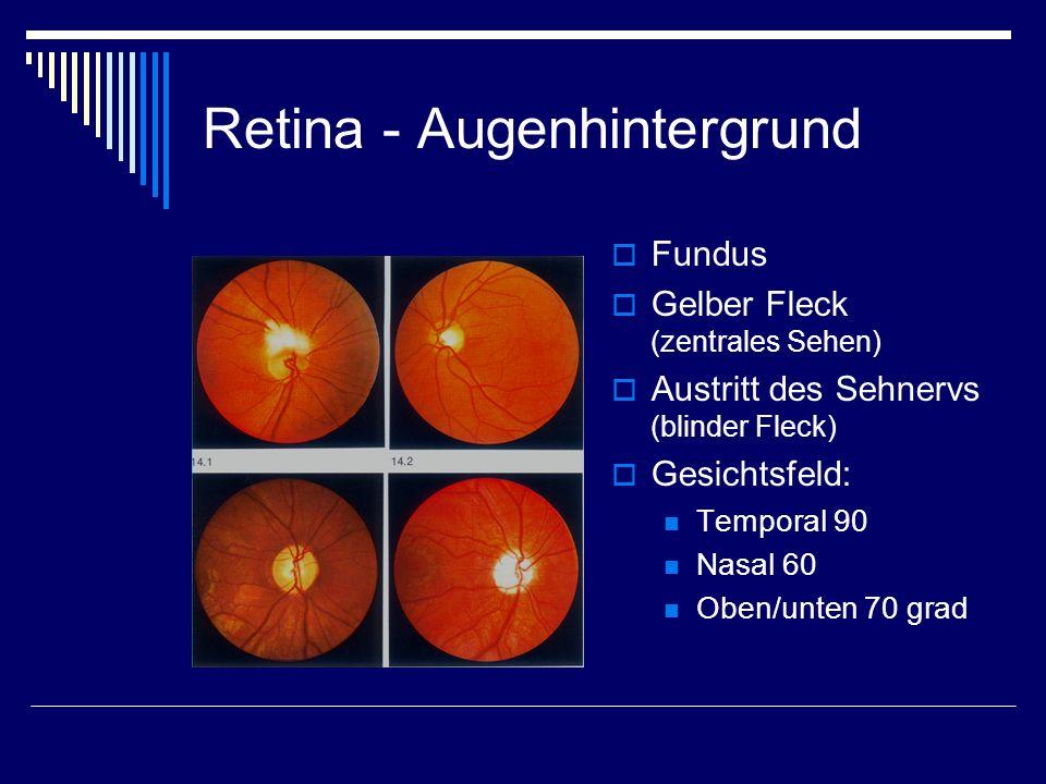 Retina - Augenhintergrund