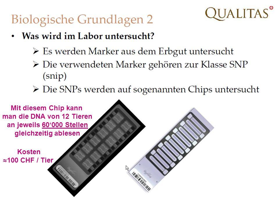 Mit diesem Chip kann man die DNA von 12 Tieren