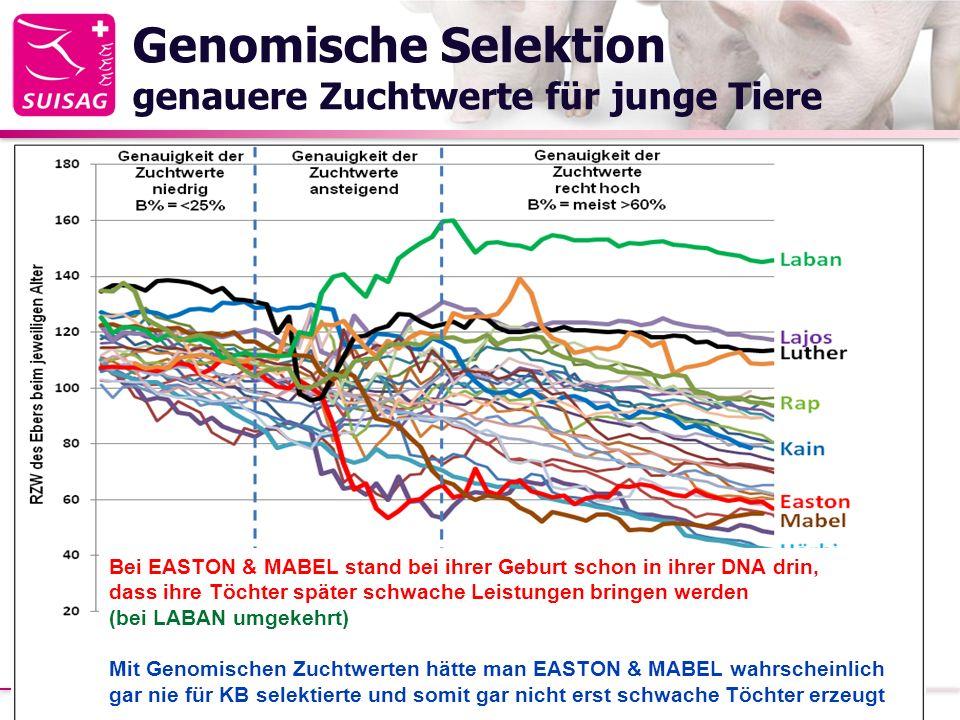 Genomische Selektion genauere Zuchtwerte für junge Tiere