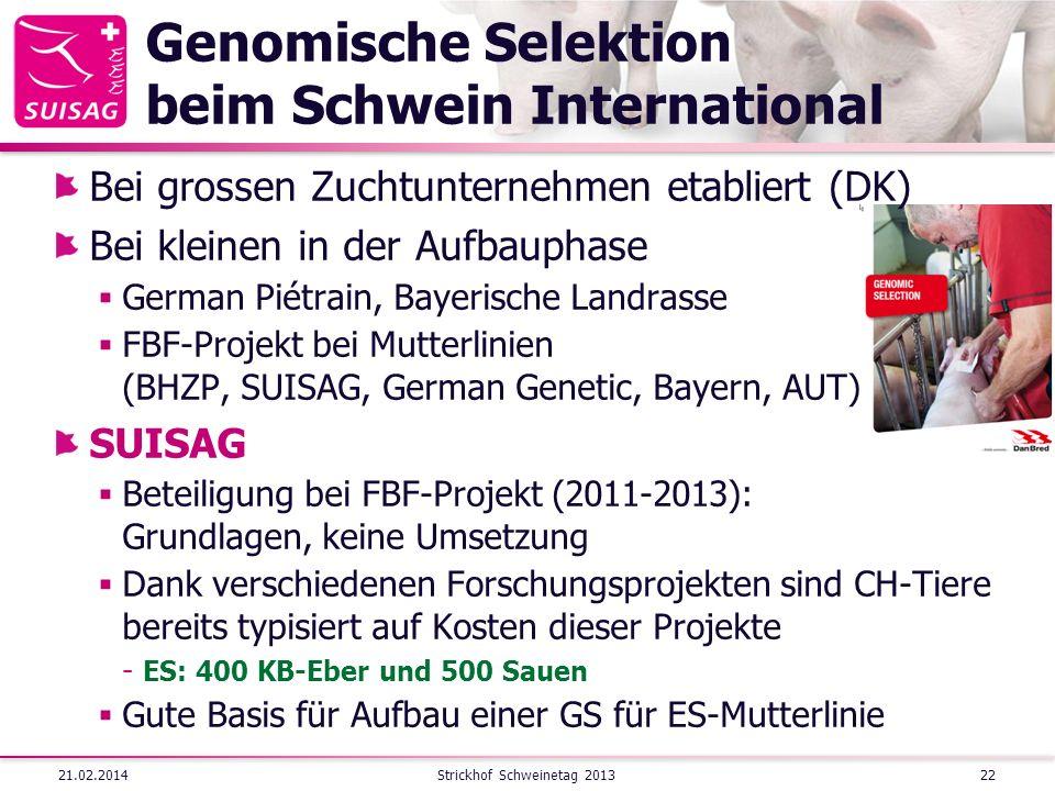 Genomische Selektion beim Schwein International