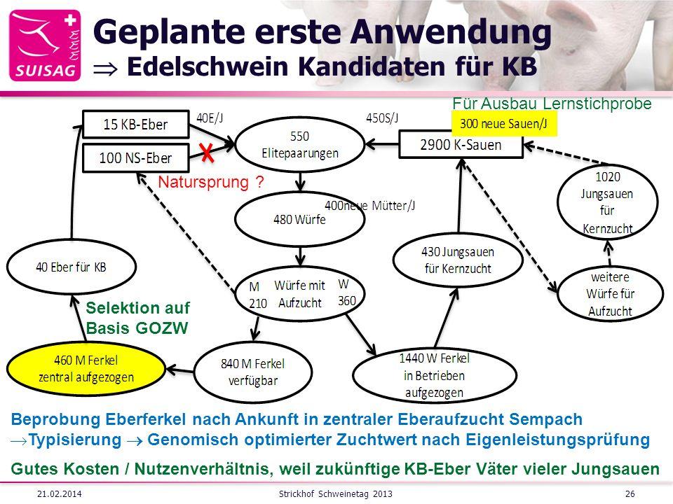 Geplante erste Anwendung  Edelschwein Kandidaten für KB
