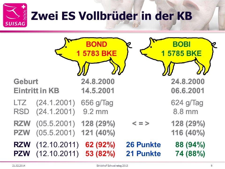 Zwei ES Vollbrüder in der KB