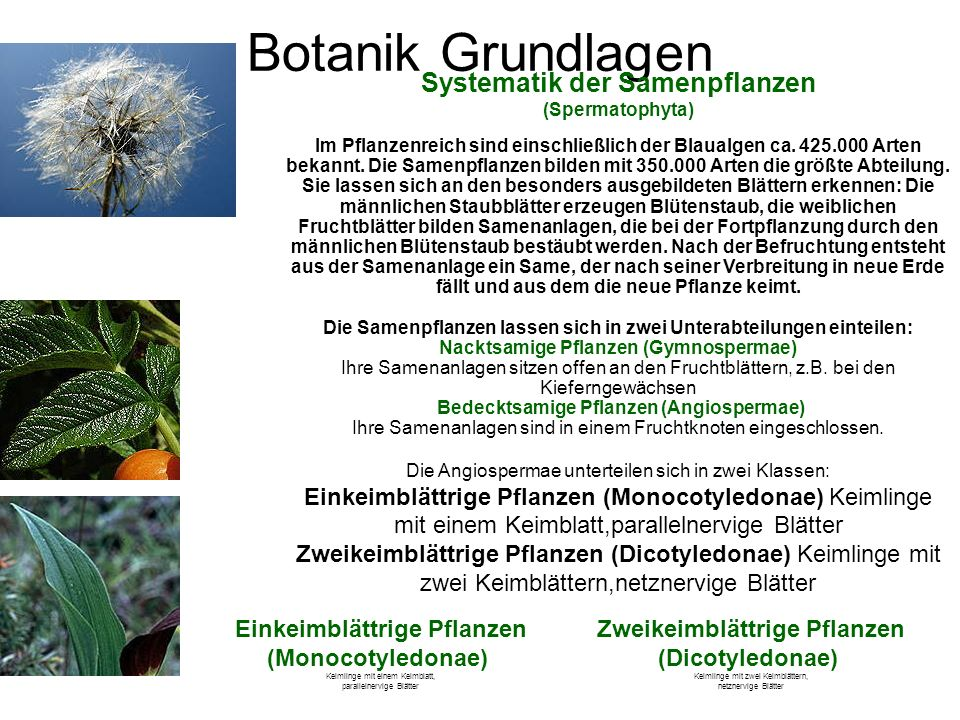 Atemberaubend Arten Von Pflanzen Arbeitsblatt Zeitgenössisch - Super ...