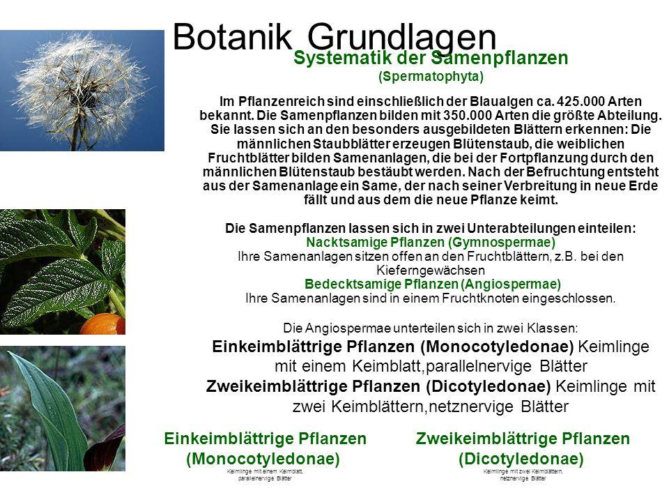 Die Samenpflanzen lassen sich in zwei Unterabteilungen einteilen:
