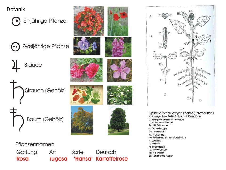 Botanik Botanik