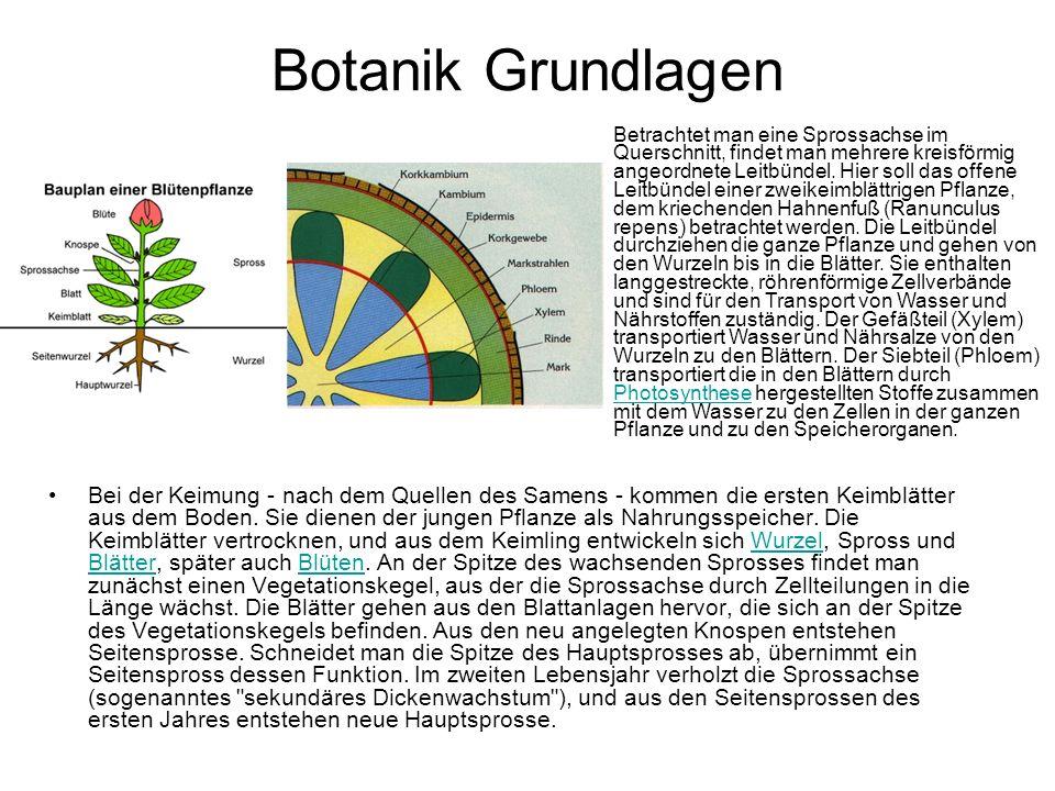 Botanik Grundlagen