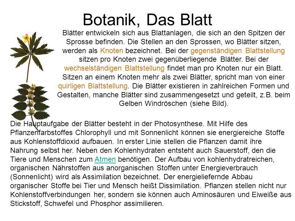 Botanik, Das Blatt