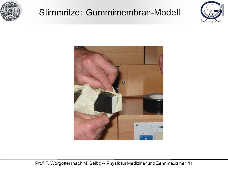 Stimmritze: Gummimembran-Modell