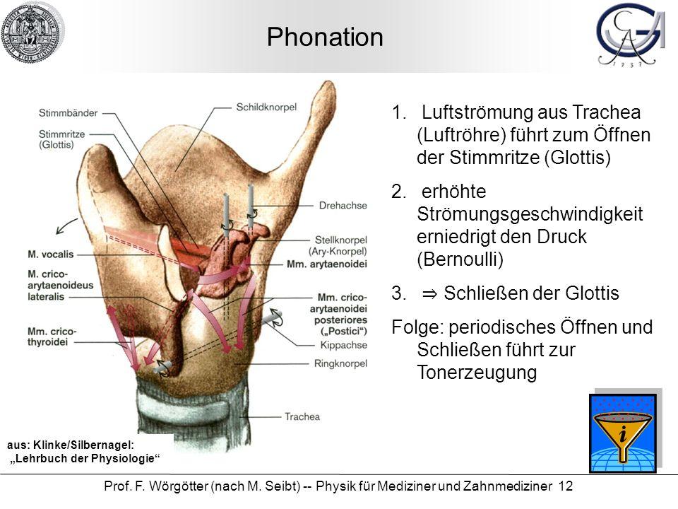 Phonation Luftströmung aus Trachea (Luftröhre) führt zum Öffnen der Stimmritze (Glottis)