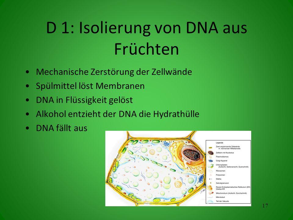 D 1: Isolierung von DNA aus Früchten