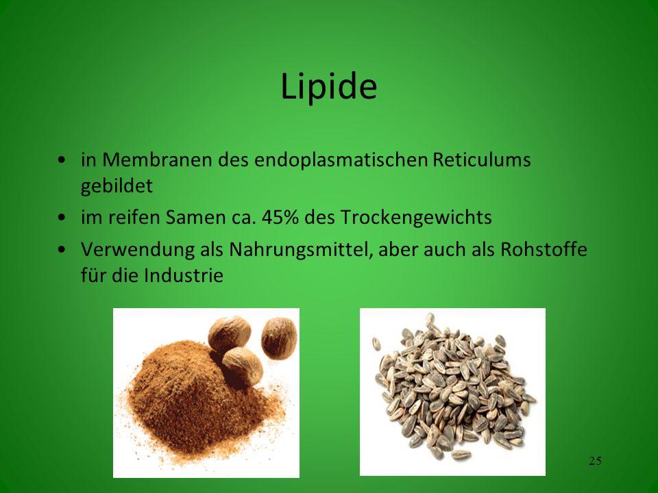 Lipide in Membranen des endoplasmatischen Reticulums gebildet
